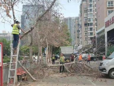 #郑州15课法桐树被灌农药濒临死亡#不仅缺德,更是违法!-米时光